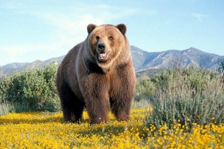Белый медведь и медведь Кадьяк