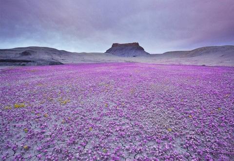 Цветущая пустыня (граница США и Мексики)
