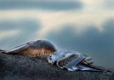 Деревня разбившихся птиц