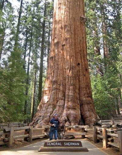 Самые высокое дерево Генерал Шерман