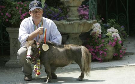 Лошадь самое маленько животное
