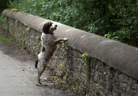 Мост погибших собак