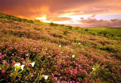 Цветущая пустыня