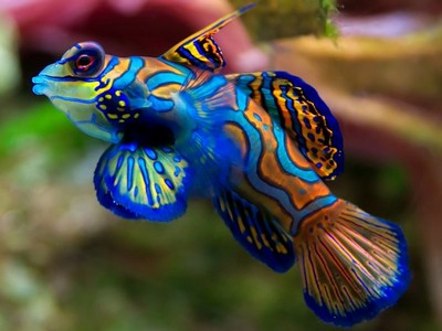 Самые красивые рыбы