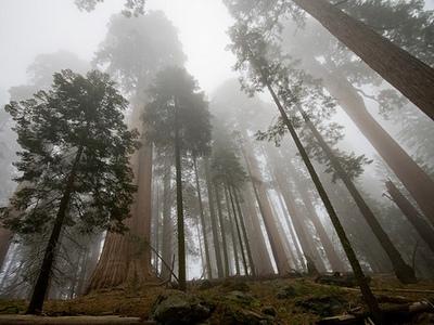 Самые высокие и большие деревья