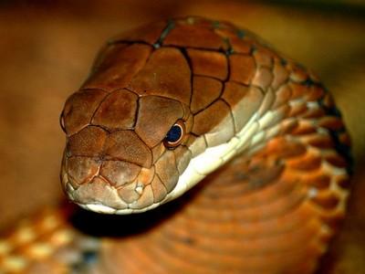 Самые большие змеи