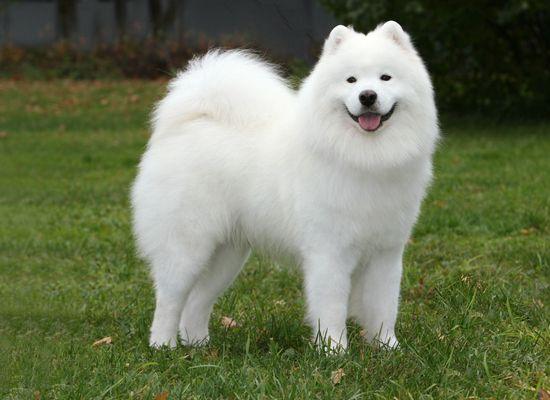 картинки красивые собак