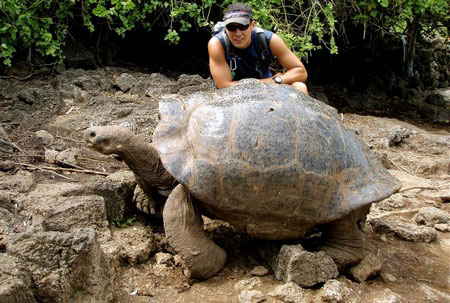 Слоновая черепаха - самая большая сухопутная черепаха